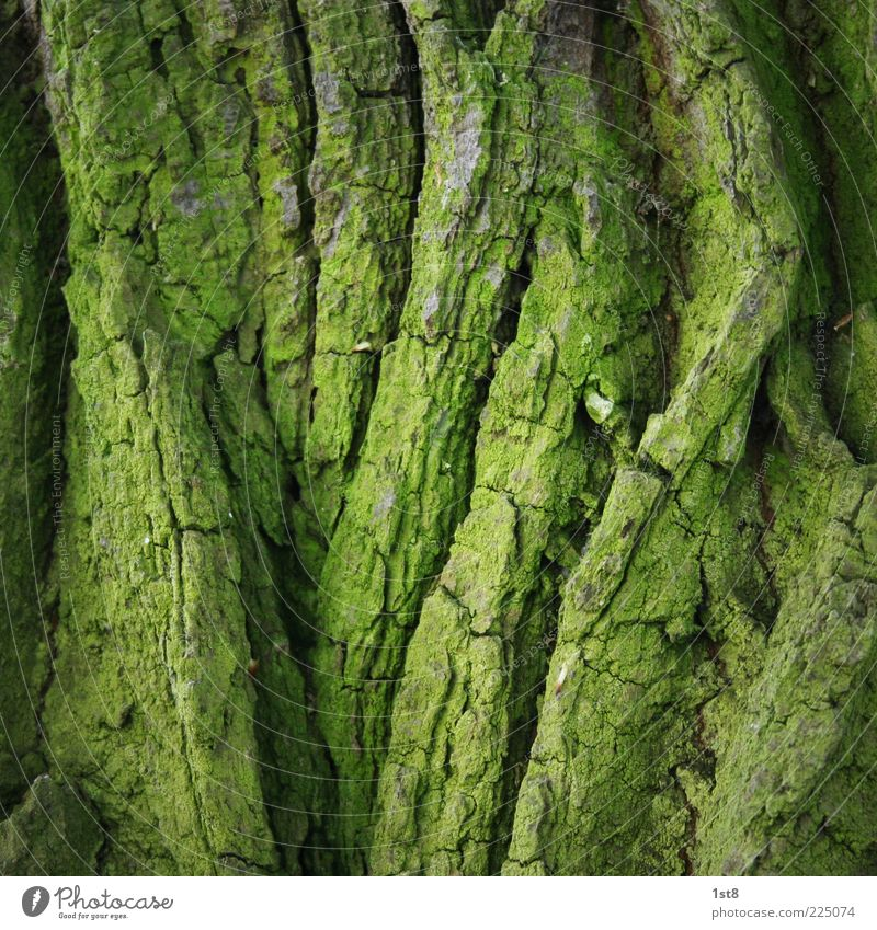 green line Environment Nature Plant Tree Moss Old Tree bark Green Foliage plant Structures and shapes Line Colour photo Close-up Detail Deserted Copy Space top