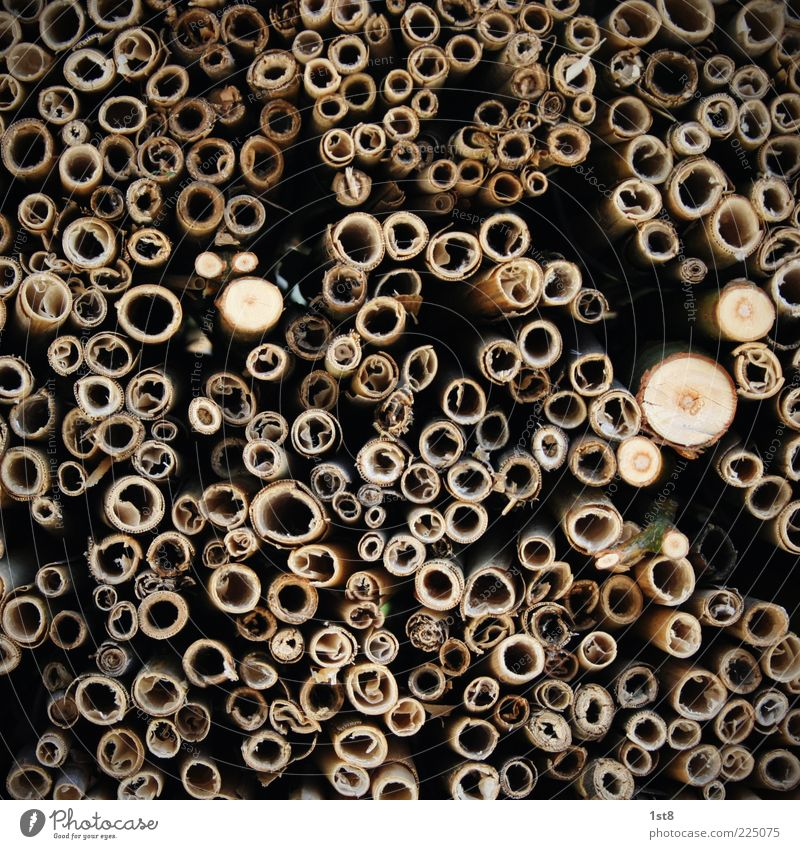 Nature Old Plant Environment Accumulation Hollow Average Close-up Stack of wood Logging Biomass Texture of wood Lumber industry Wooden pole