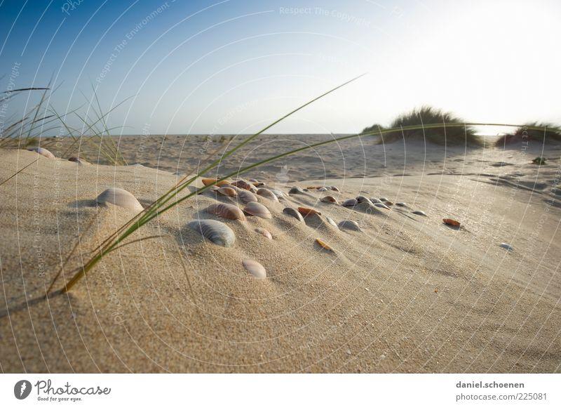 Nature Blue Sun Summer Beach Vacation & Travel Ocean Relaxation Landscape Environment Grass Sand Coast Bright Horizon Island