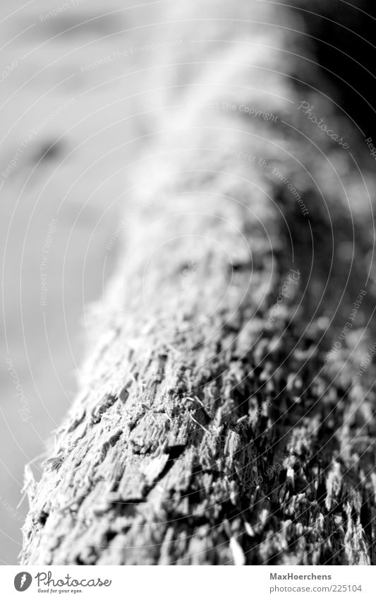 trunk Nature Plant Tree Firm Calm Tree trunk Depth of field Black & white photo Exterior shot Detail Pattern Structures and shapes Deserted Day Contrast Blur
