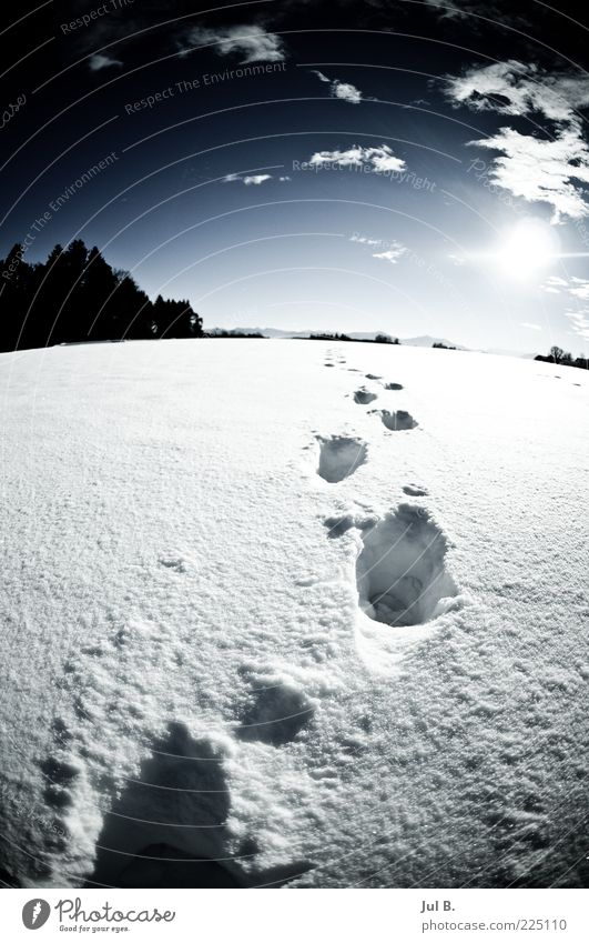 snowway Nature Beautiful weather Blue White Future Sun Luminosity Footprint Snow track Snow layer Winter's day Winter sun Deserted Animal tracks Wide angle
