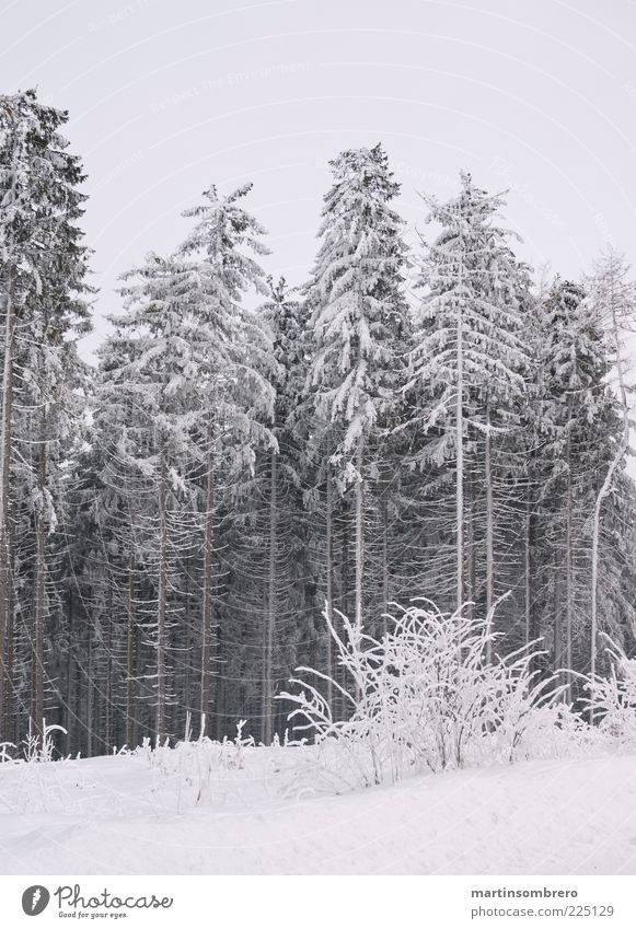 Nature Water Calm Winter Forest Cold Snow Landscape Ice Frost Stagnating Coniferous trees