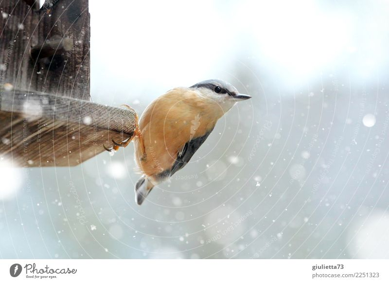 Nature Beautiful Animal Winter Cold Snow Small Happy Garden Bird Orange Snowfall Wild animal Observe Help Appetite