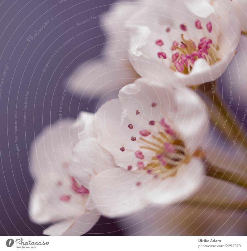 SpringMagic Wellness Life Harmonious Well-being Contentment Senses Relaxation Calm Meditation Wedding Nature Plant Flower Blossom Garden Park Blossoming