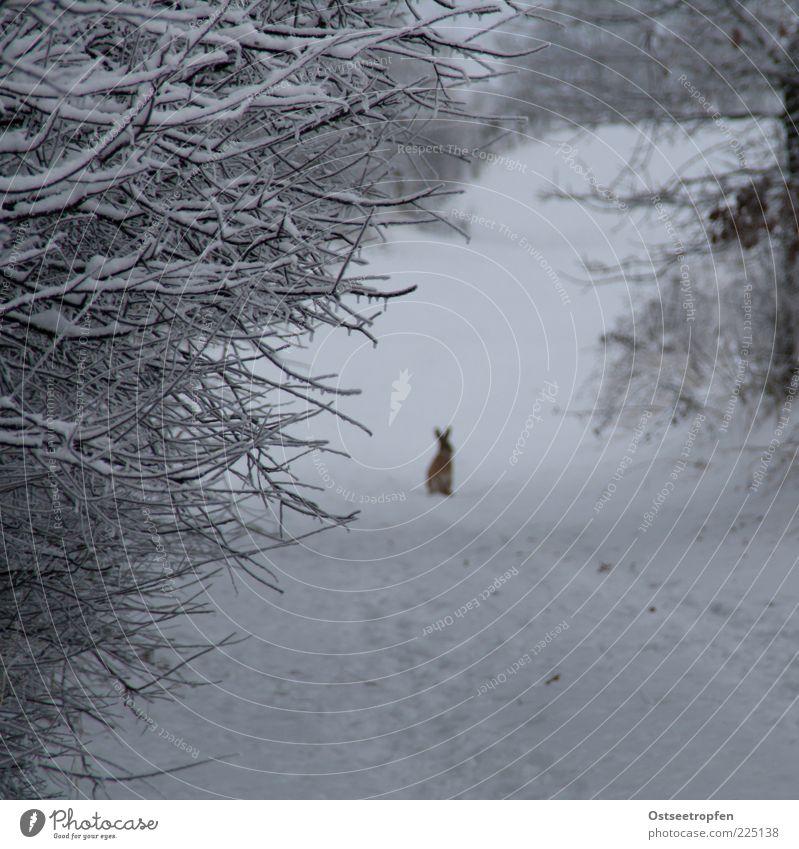 Nature White Plant Winter Black Animal Snow Lanes & trails Brown Wait Sit Bushes Authentic Wild animal Cute Observe