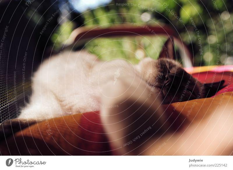 Green Red Summer Calm Animal Relaxation Dream Cat Brown Contentment Sleep Lie Chair Pelt Serene To enjoy