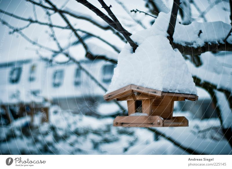 Nature Tree Winter Cold Snow Environment Garden Wood Weather Ice Frost Exceptional Branch Birdhouse Snow layer