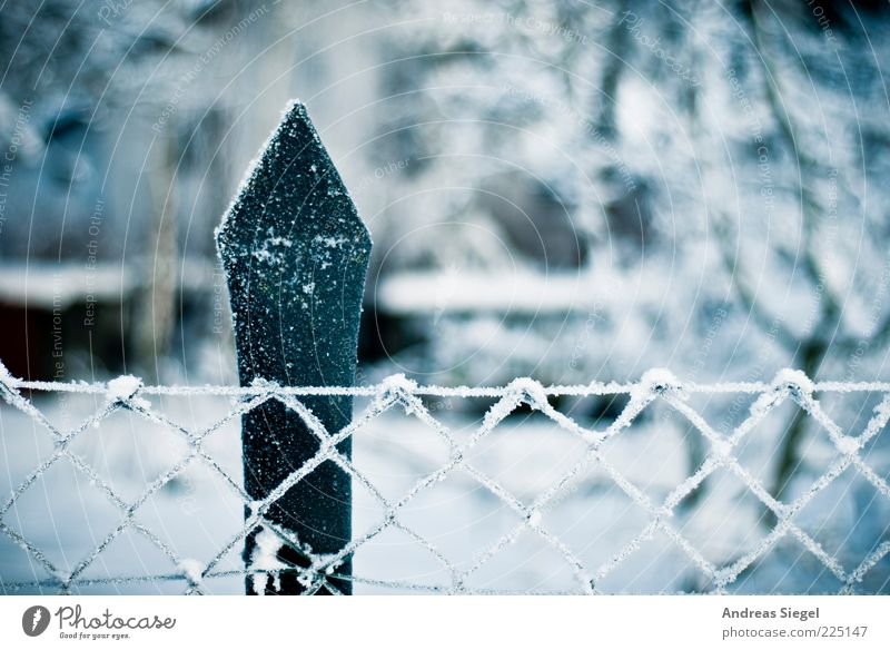 Weis(s)time Environment Nature Landscape Winter Ice Frost Snow Garden Fence Fence post Wire netting fence Authentic Cold Point White Esthetic Climate Hoar frost