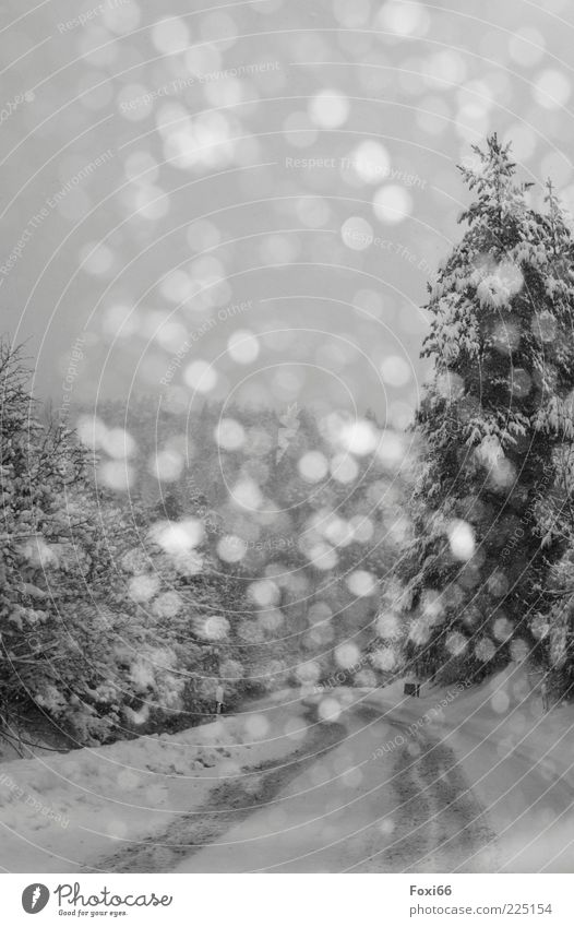 more than 30 flakes Winter Snow Sky Storm Gale Tree Forest Deserted Traffic infrastructure Street Lanes & trails Dark Beautiful Black White Calm Environment