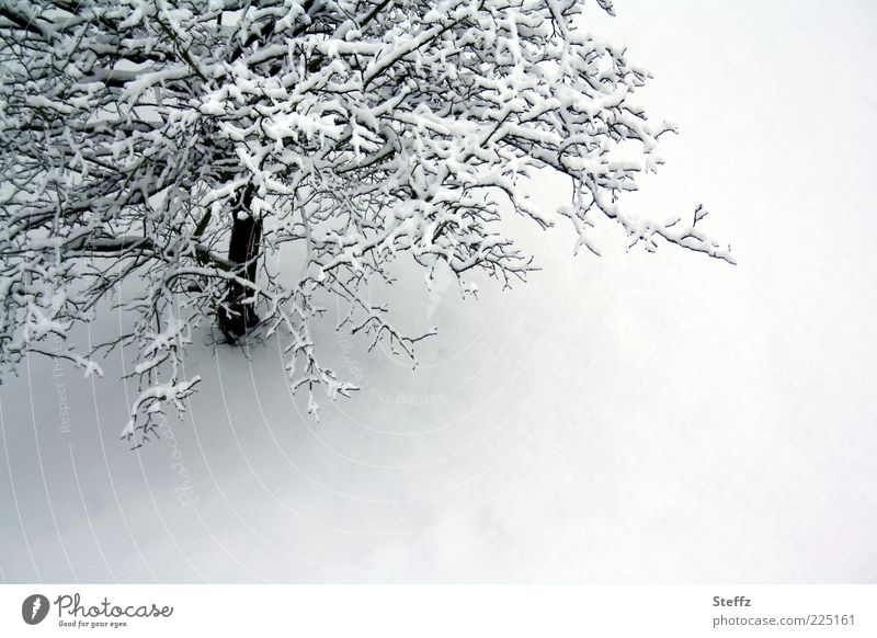 winter silence Environment Nature Winter Snow Tree Snow layer Cold Gray White Calm Loneliness Winter mood Ambience Climate Winter's day Untouched Branch January
