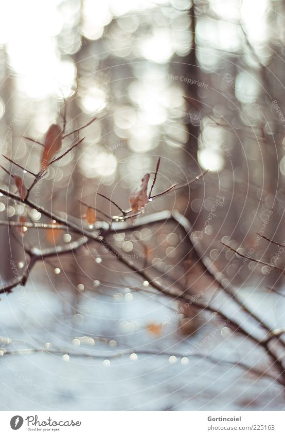Nature Winter Forest Snow Landscape Environment Brown Drops of water Branch Twig Branchage Reflection Shallow depth of field Winter forest