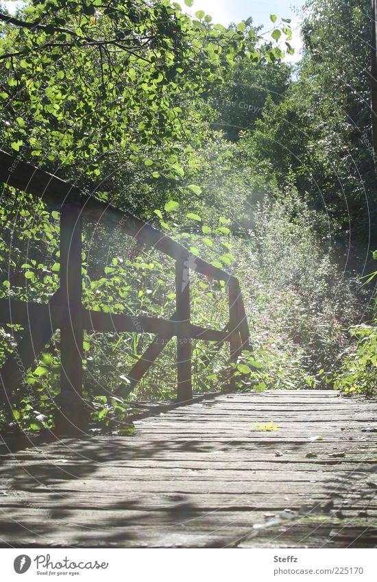 Nature Green Beautiful Plant Summer Calm Landscape Lanes & trails Bright Moody Natural Bridge Bushes Romance Beautiful weather Footpath