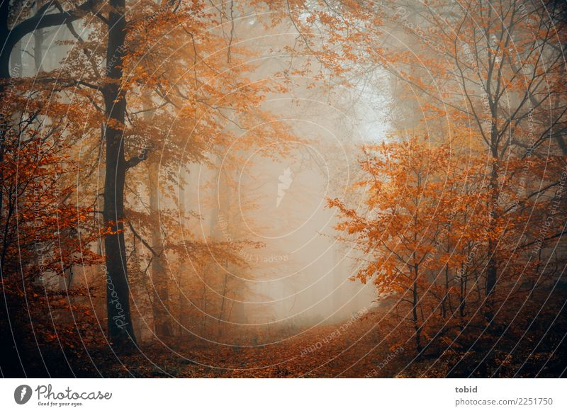 automne Nature Landscape Plant Elements Autumn Bad weather Fog Tree Grass Bushes Forest Dark Cold Loneliness Uniqueness Idyll Seasons Autumnal Autumn leaves
