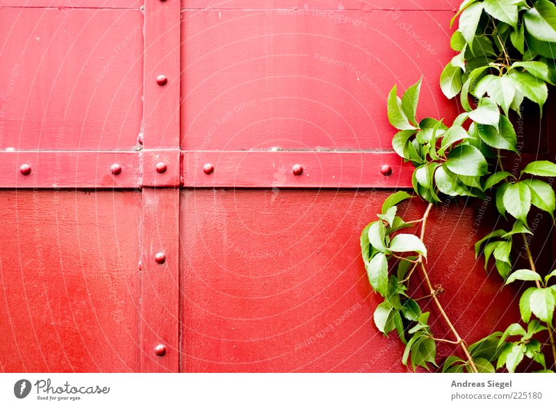 red-green Nature Plant Bushes Leaf Foliage plant Building Gate Rivet Prop Metal Line Natural Green Red Colour Contrast Crucifix Colour photo Exterior shot