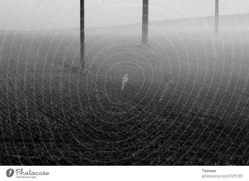Fog of horror Earth Winter Agriculture Arable land Field Dark Telegraph pole Electricity pylon Black & white photo Exterior shot Deserted Ground fog Morning fog