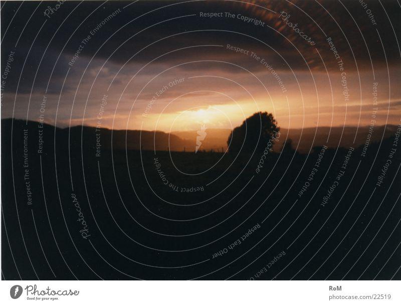 Good evening1 Tree Light Sunset Mountain Evening Sky