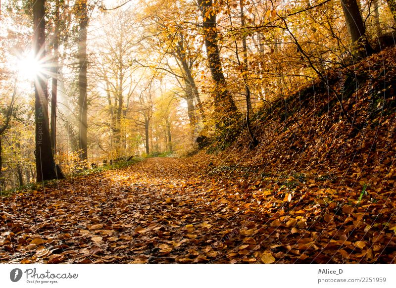 Sunny autumn day in the Siebengebirge Mountains Vacation & Travel Tourism Trip Adventure Freedom Hiking Environment Nature Landscape Plant Animal Earth Sunlight