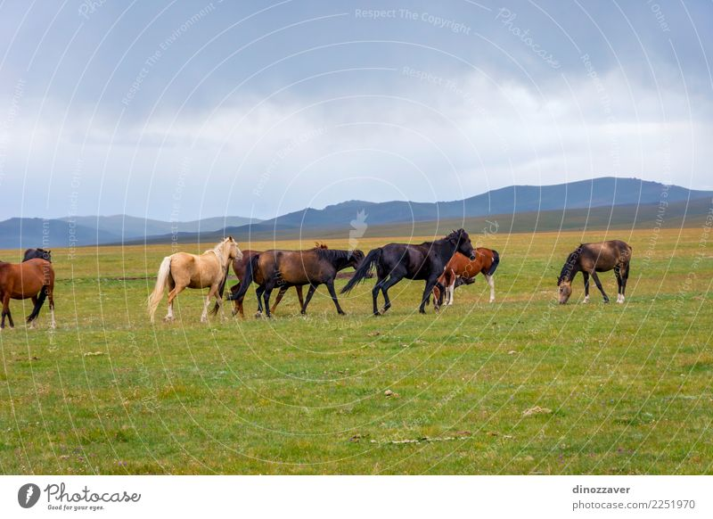 Abandoned house with horses, Song Kul - a Royalty Free Stock