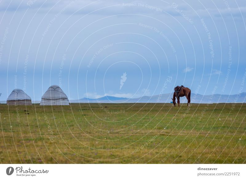 Horse in a pasture with yurts, Kyrgyzstan Beautiful Vacation & Travel Tourism Summer Mountain Nature Landscape Animal Sky Clouds Fog Grass Park Meadow Hill Rock