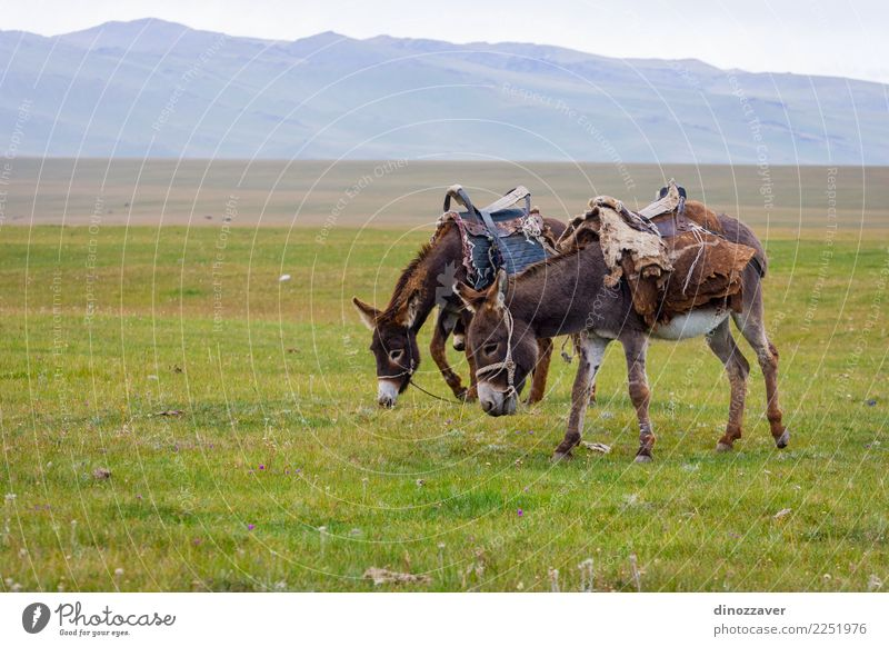 Two donkeys at a pasture Joy Face Vacation & Travel Mountain Baby Bottom Nature Landscape Animal Sky Grass Meadow Village Fur coat Farm animal Horse Funny Cute