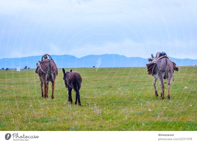 Donkey family at a pasture Sky Nature Vacation & Travel Green Landscape Animal Joy Mountain Face Baby animal Funny Meadow Grass Gray Brown Vantage point