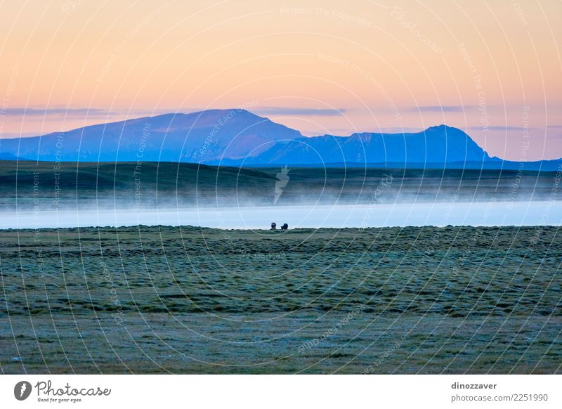 Song Kul lake in sunrise, Kyrgyzstan Beautiful Vacation & Travel Tourism Summer Mountain Nature Landscape Animal Sky Clouds Fog Grass Park Meadow Hill Rock Lake
