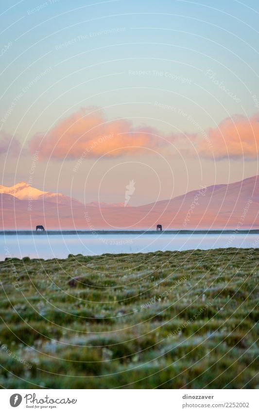 Song Kul lake with horses in sunrise Beautiful Vacation & Travel Summer Snow Mountain Nature Landscape Animal Sky Clouds Fog Grass Park Meadow Hill Rock Lake