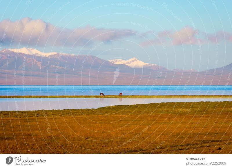 Song Kul lake with horses and mountains Beautiful Vacation & Travel Summer Sun Snow Mountain Nature Landscape Animal Clouds Fog Grass Park Meadow Hill Rock Lake