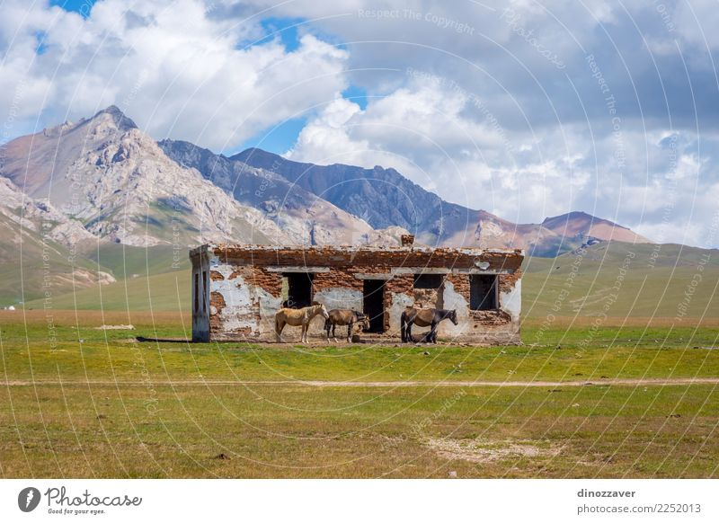 Abandoned house with horses, Song Kul Beautiful Vacation & Travel Summer Mountain House (Residential Structure) Nature Landscape Animal Clouds Fog Grass Park