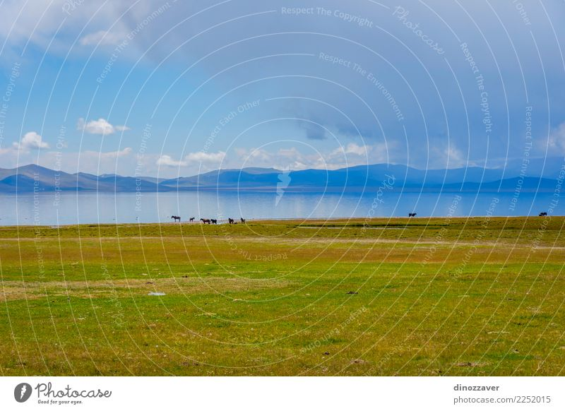 Horses by the Song Kul lake Beautiful Vacation & Travel Summer Sun Mountain Nature Landscape Animal Clouds Fog Grass Park Meadow Hill Rock Lake Herd Natural
