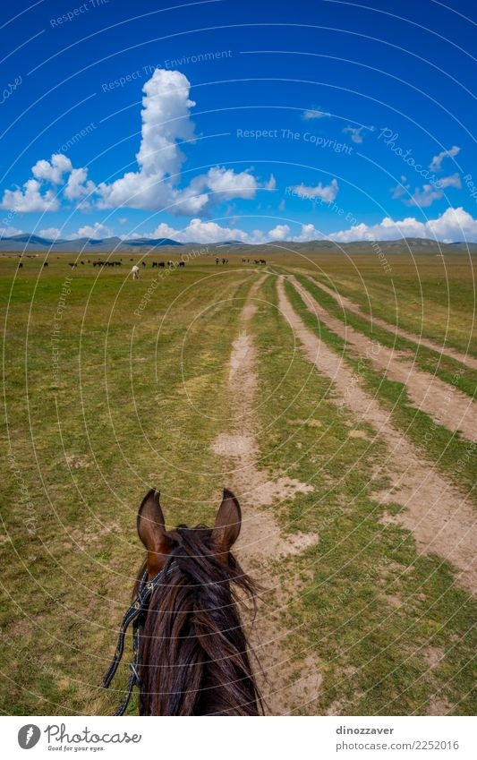 Horse ride, first person view Lifestyle Leisure and hobbies Vacation & Travel Summer Mountain Sports Nature Landscape Animal Grass Park Meadow Lake Transport