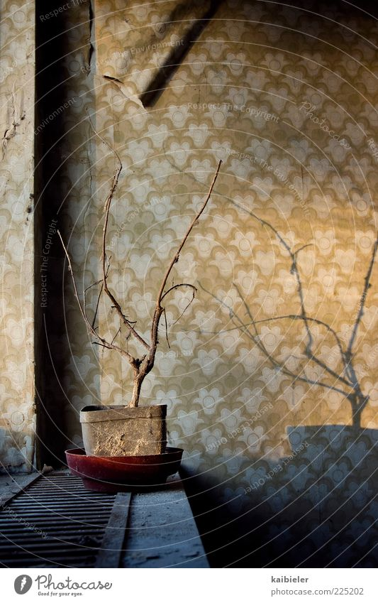 shadow warrior Living or residing Flat (apartment) Houseplant Window board Wallpaper Wallpaper pattern Flowerpot Withered Shriveled Building Wall (barrier)