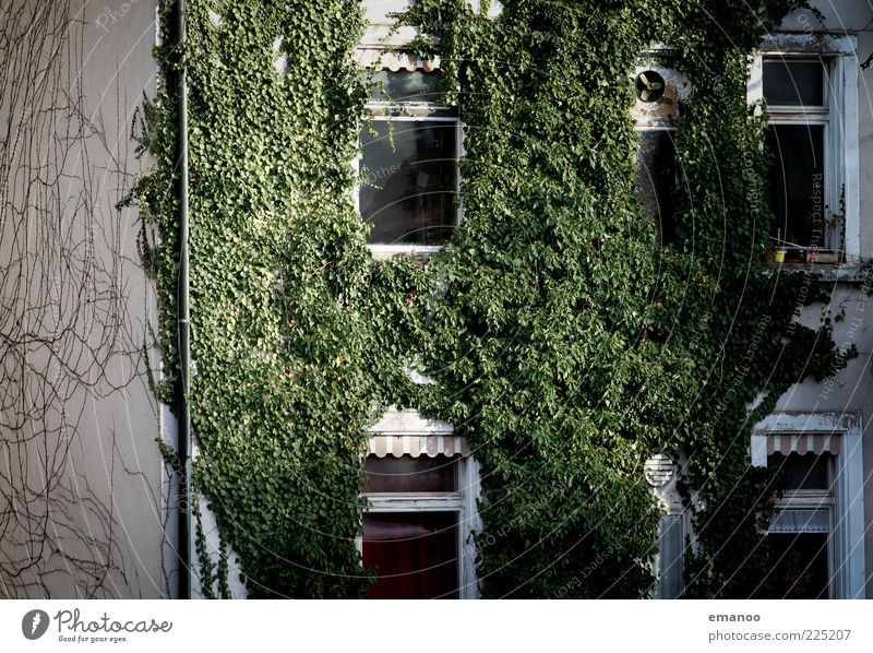 ecohouse Nature Plant Ivy Populated House (Residential Structure) Building Architecture Garden Window Growth Fresh Broken Sustainability Green Esthetic Old
