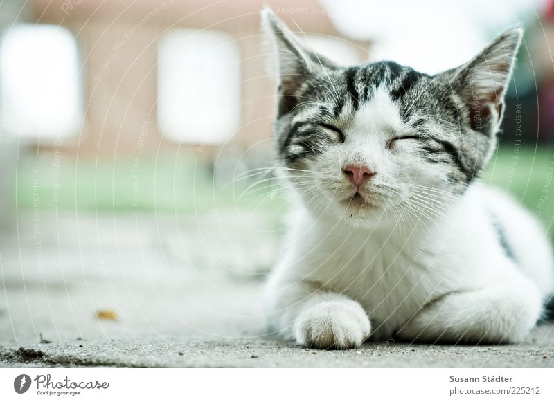 I'll be off. Pet Cat Animal face 1 Baby animal Sleep Serene Patient Calm Relaxation Fatigue Siesta Closed eyes White Farm Blur Easygoing Exterior shot Close-up