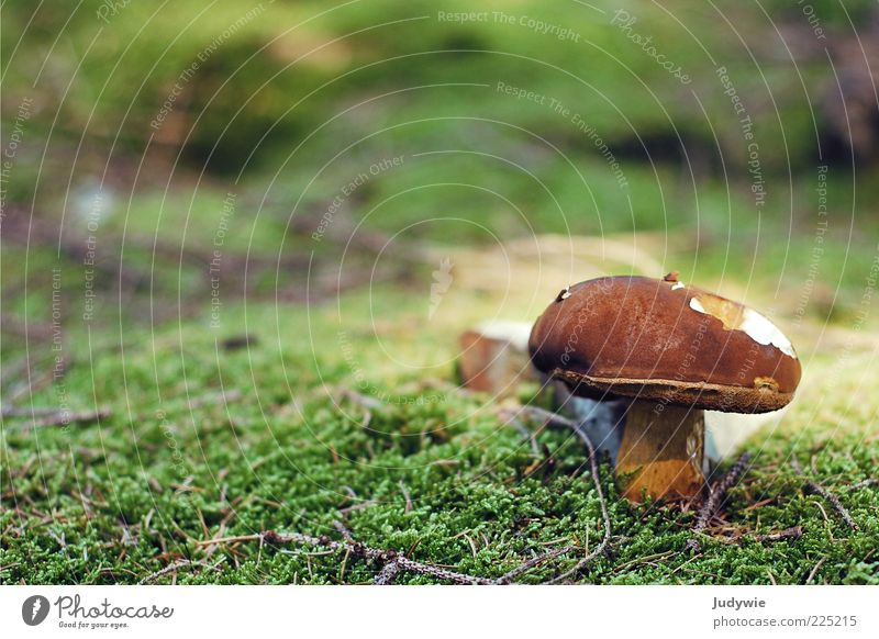pitted Environment Nature Plant Summer Autumn Moss Mushroom Growth Delicious Natural Brown Green Enchanted forest Colour photo Exterior shot Close-up Deserted