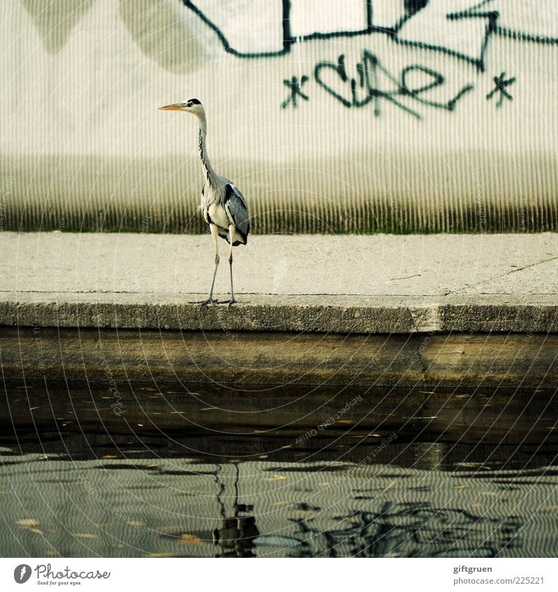 Water City Animal Graffiti Wall (barrier) Stone Legs Bird Exceptional Wild animal Concrete Stand Feather Animal face Pond Beak