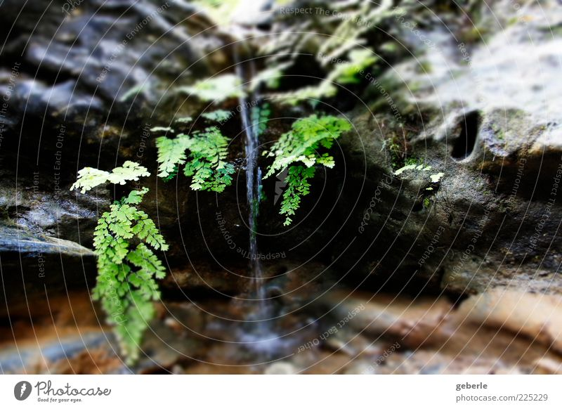Water Green Plant Gray Stone Small Wet Drops of water Natural Brook Waterfall Fern Splashing Water reflection