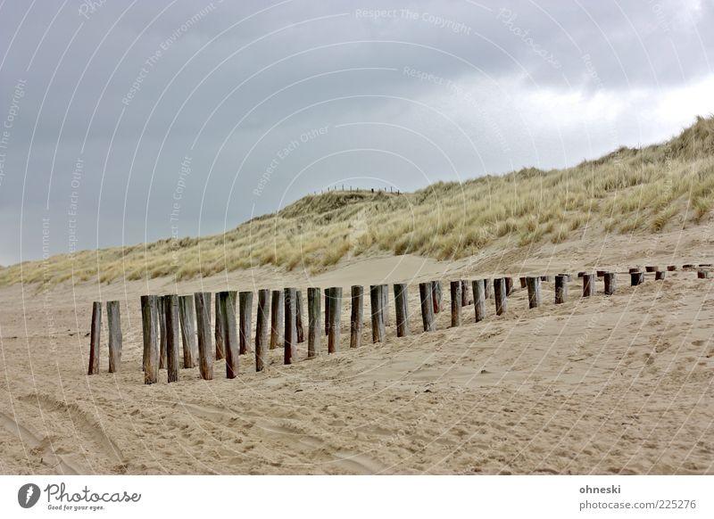 Plant Beach Clouds Winter Calm Relaxation Landscape Wood Sand Coast Rain North Sea Beach dune Dune Bad weather Break water