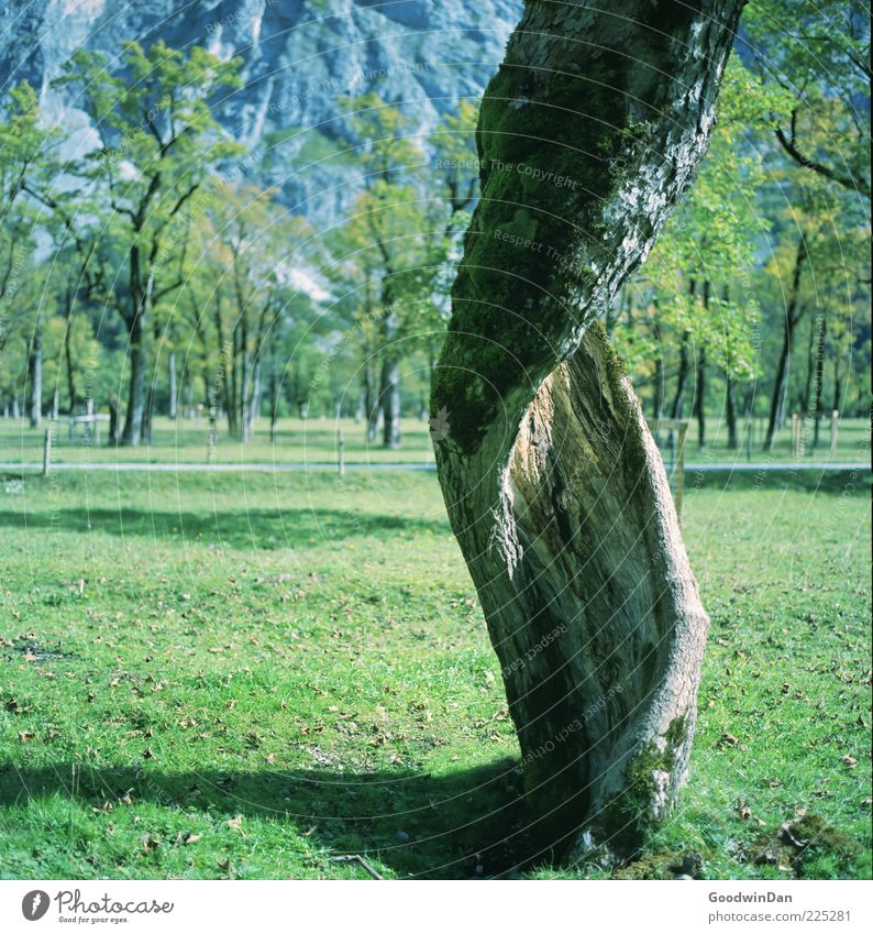 Nature Old Tree Plant Autumn Environment Park Natural Exceptional Tree trunk Distorted