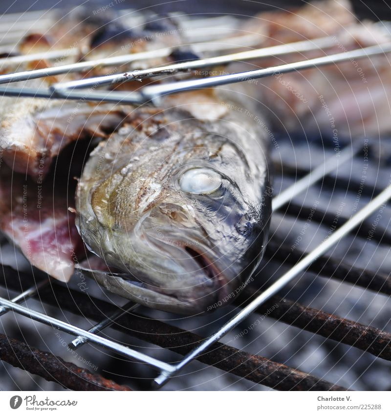 Another grilled fish Fish Barbecue (event) Barbecue (apparatus) Rust Grill Lie Hot Delicious Brown Gold Pink Silver Fragrance Dish Colour photo Close-up Day