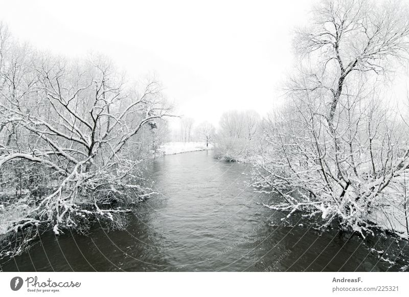 grey in grey Environment Nature Landscape Water Winter Weather Bad weather Fog Ice Frost Snow Tree Bushes River Spree Cold Gray Exterior shot Deserted