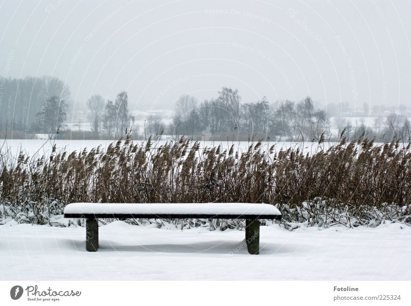 Longing for summer!!! Environment Nature Landscape Plant Sky Clouds Winter Bad weather Ice Frost Snow Tree Lakeside Cold Natural White Common Reed Bench