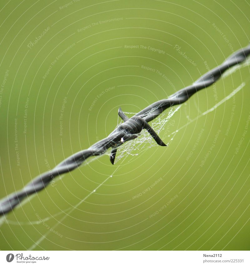 Water Green Gray Metal Wet Drops of water Point Steel Dew Spider's web Barbed wire Close-up