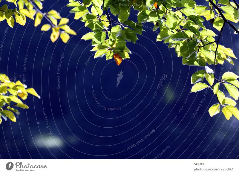 Blue Summer Leaf Calm Far-off places Dark Autumn Background picture Moody Illuminate Simple Seasons Deep Twig Frame Visual spectacle