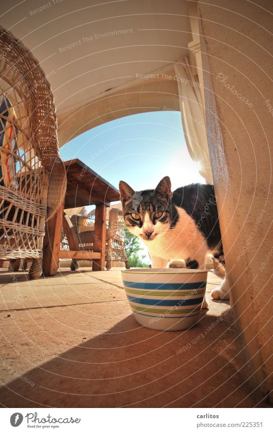 Blue Animal Wood Cat Brown Table Perspective Ground Chair Under Pelt Beautiful weather Terrace Pet To feed Bowl