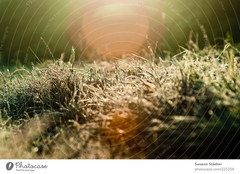 Nature Sun Meadow Grass Dream Bright Ice Bushes Frost Beautiful weather Blade of grass Drought Hoar frost Knoll Lens flare