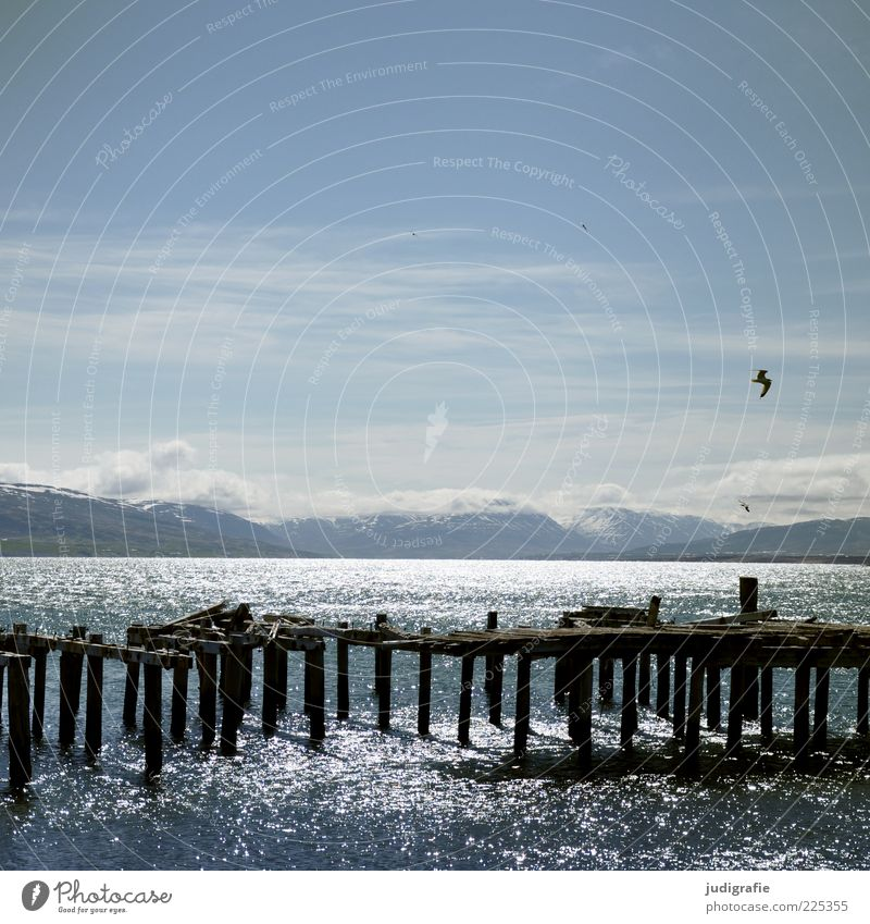 Sky Nature Water Loneliness Far-off places Animal Cold Mountain Landscape Environment Wood Coast Moody Bird Horizon Flying