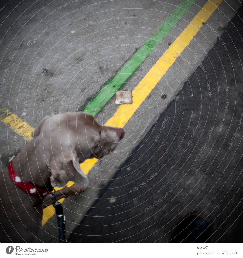 go for a walk Dog 1 Animal Line Stripe Going Esthetic Authentic Cute Multicoloured Testing & Control Arrangement Perspective Lanes & trails Walk the dog