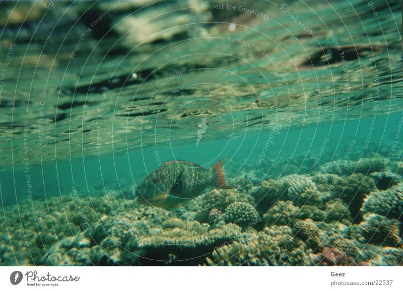 coral Underwater photo coraal fish tropical fish ocean underwater