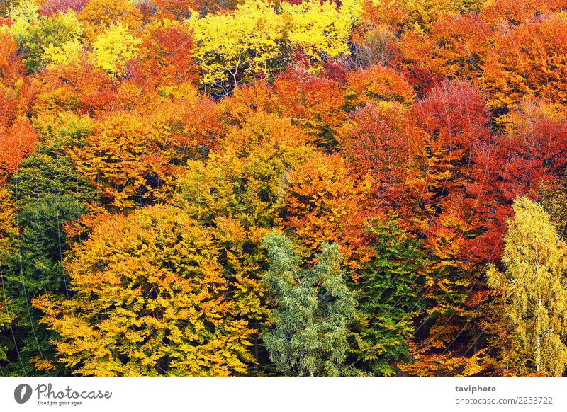 textural image of autumn foliage Nature Plant Colour Beautiful Green Landscape Tree Red Leaf Forest Yellow Environment Autumn Natural Brown Bright